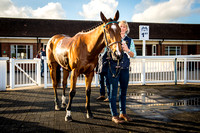 Eridge PC - Racing at Lingfield Park - 28th Oct 2014